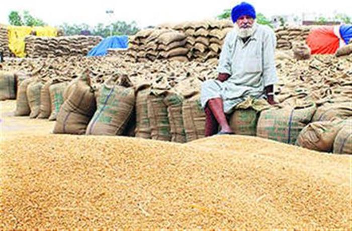 72.86 lakh metric tonnes  of paddy  arrived in Mandis of Haryana